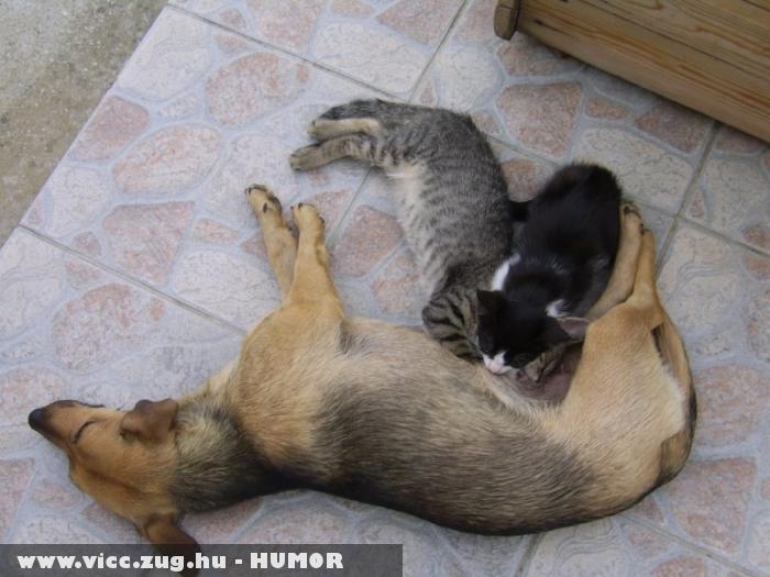 Kutya etet cicákat