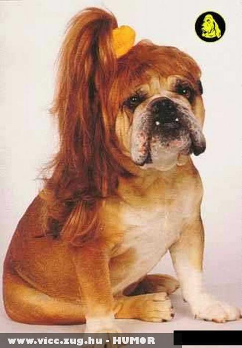 Coffos kutyó