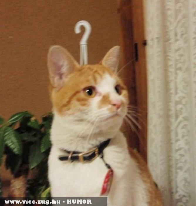 Akasztós macsek