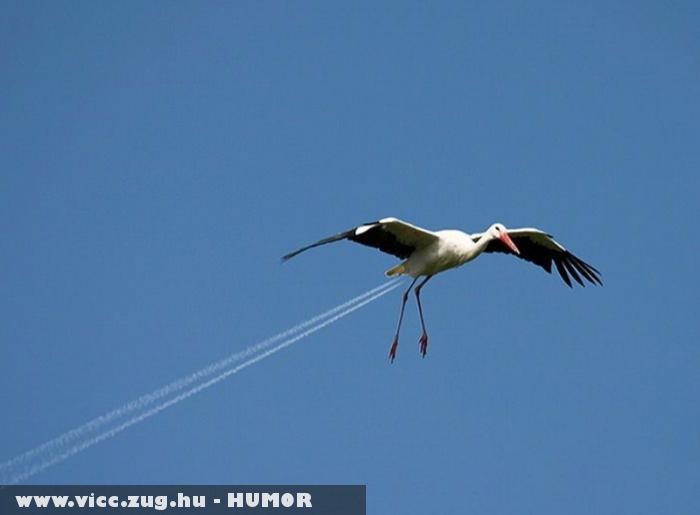Sugárhajtású gólya