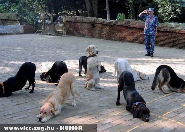 Alakzatban a kutyusok