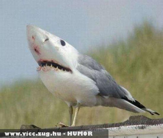 Ragadozó madár !