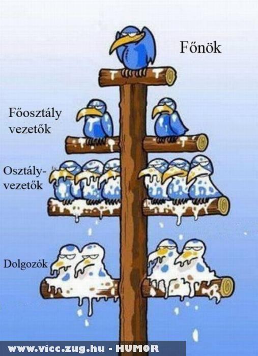 Munkahelyi hierarchia