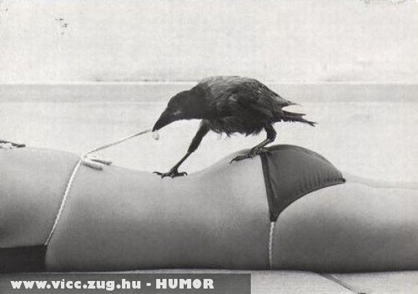 A huncut varjú