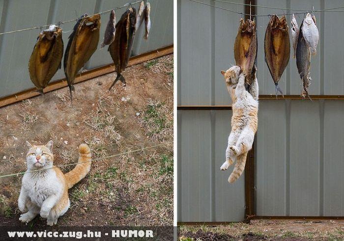 Ezek a macskák!