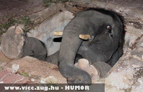 Szegény elefánt