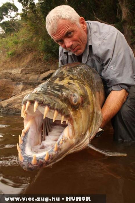 Óriás hal