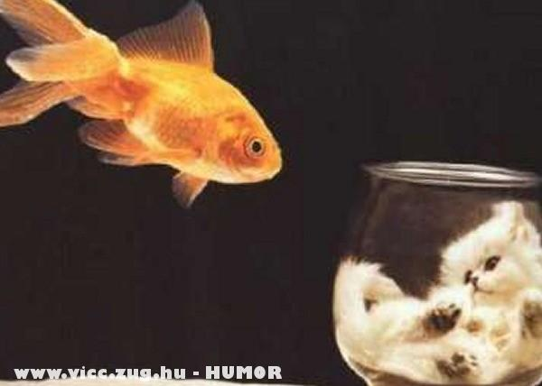 Macska akvárium