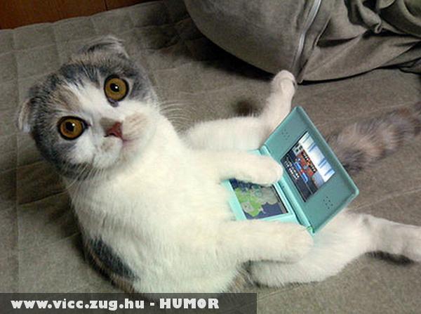 Laptop cat facebook -ozik