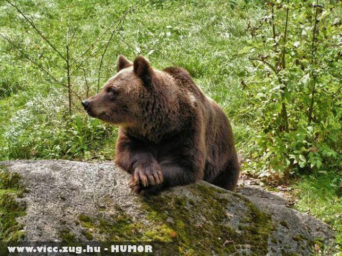 Medve póz