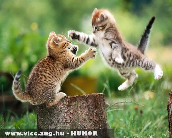 Karate cicák