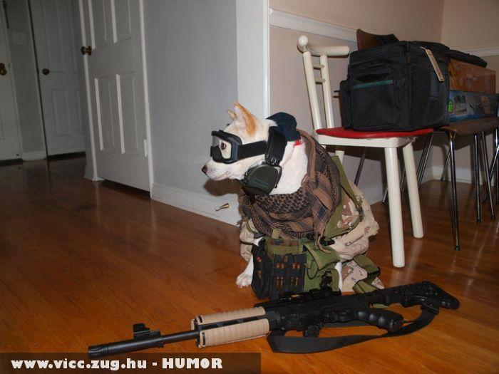 Harci kutya