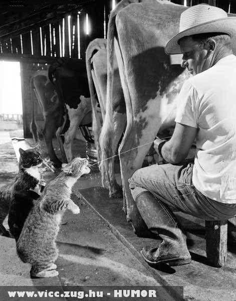 Kérsz egy kis tejet?