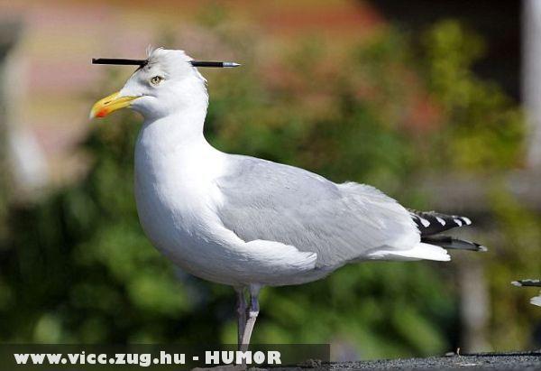 Matekot kedvelõ madár