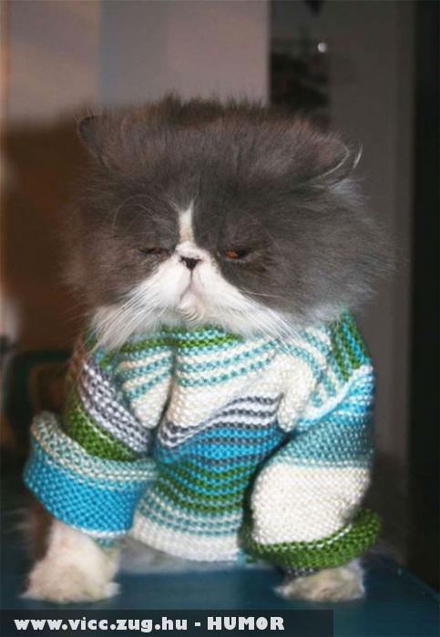 Zalán nem fogok fázni
