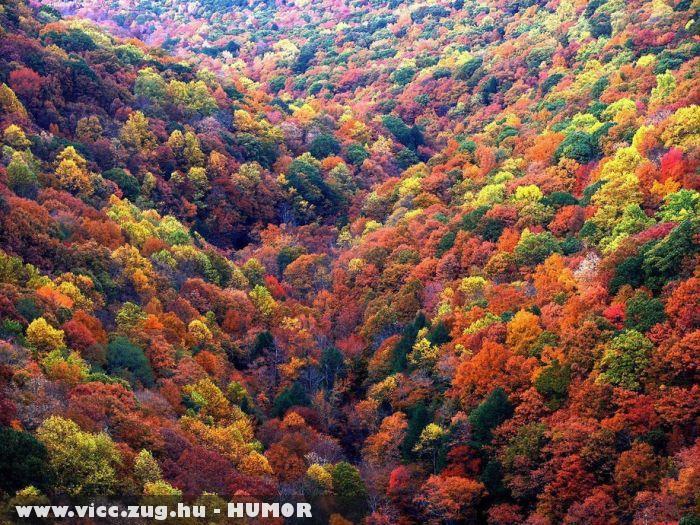 Õszi színek