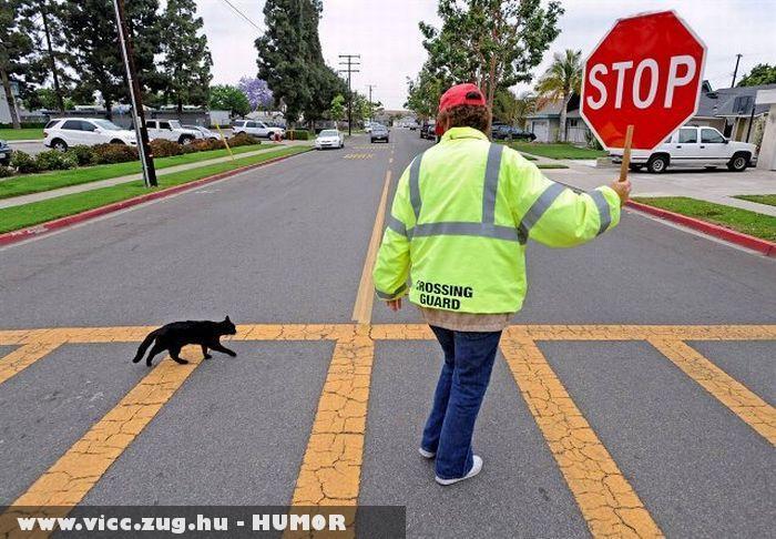Stop fekete macska az úton