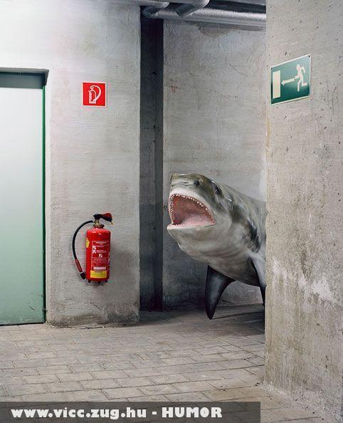 Kétéltün cápa