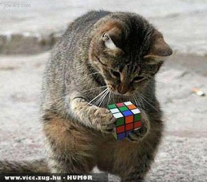 Rubik kockázik a cica