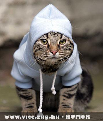 Gettó cica