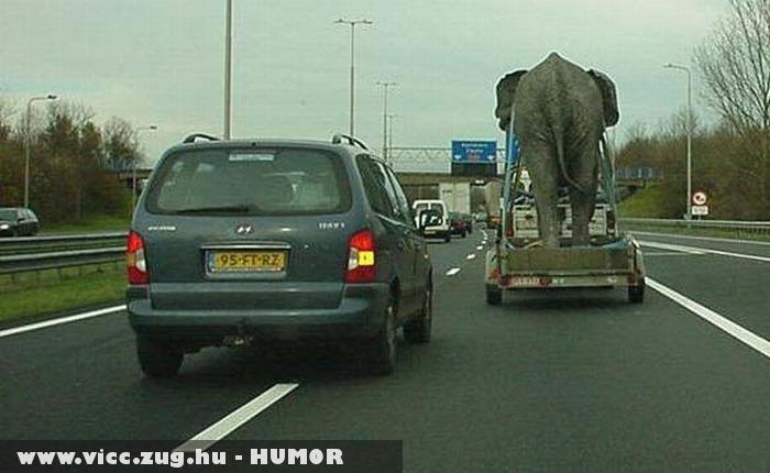 Elefántot szállít az úton