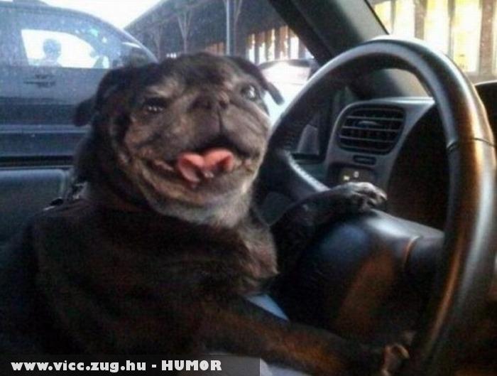 Állati taxisofõr