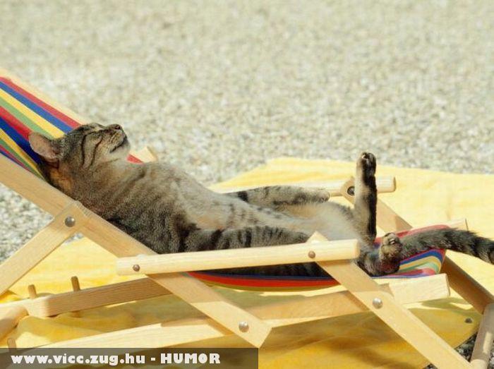 Szieszta macskáéknál
