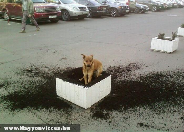 Kitartó kutyus