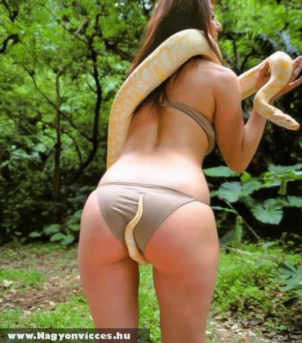 Megkapaszkodott a kígyó