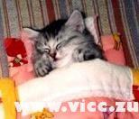 Szép Álmokat !