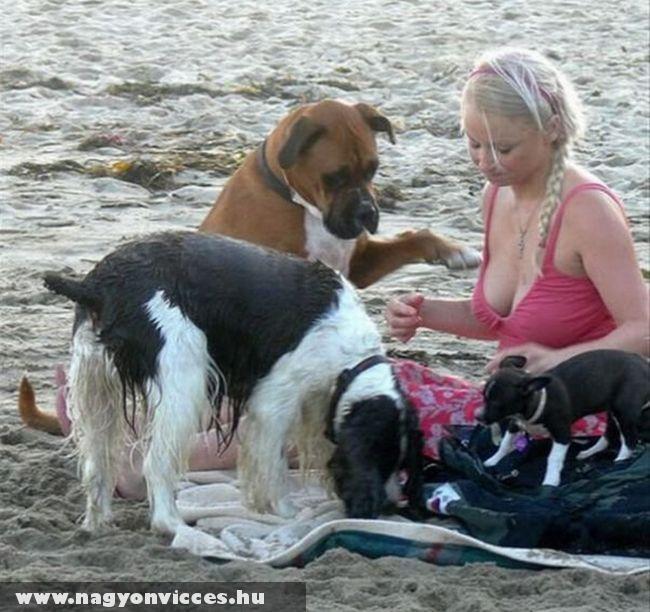 Kutya jó világ