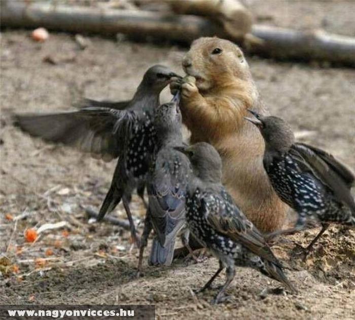 Túlerõben a madarak