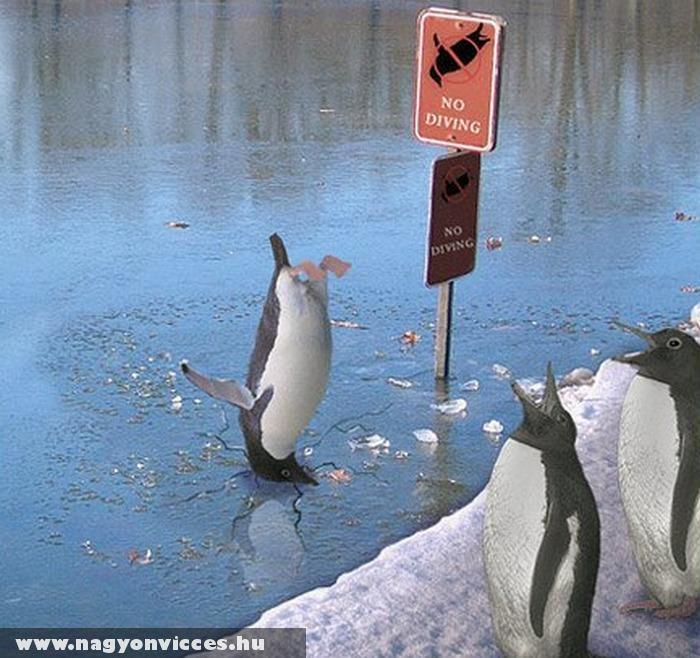 Figyelmetlen volt a pingvin