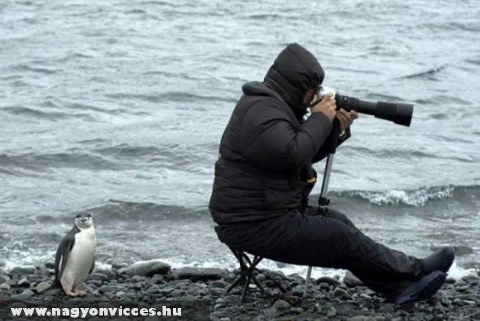 Hol van már egy pingvin?