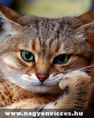 Gondolkodó cica
