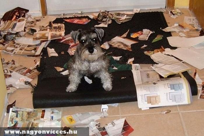 Átnyálazta az újságokat