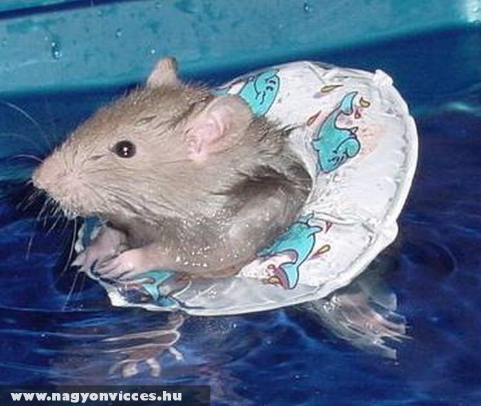 Úszólecke egereknek