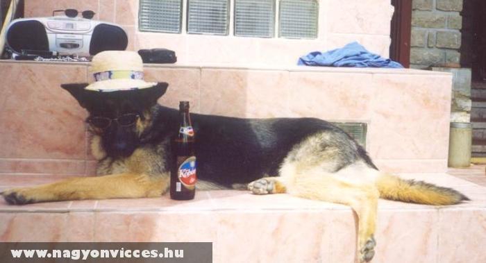 Menõ kutya