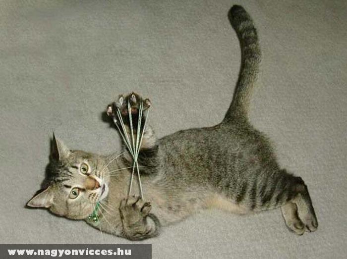 Játékos macska