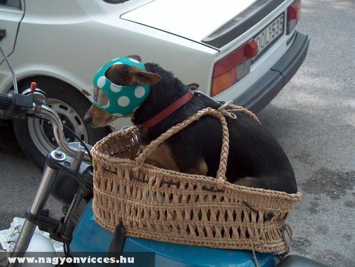 Bukósisak kutyáknak