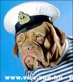Canis Admiralis :