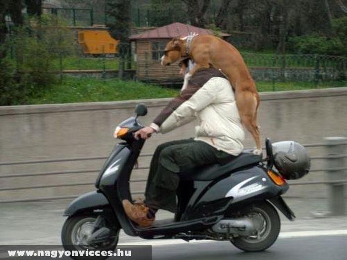 Kutya utas