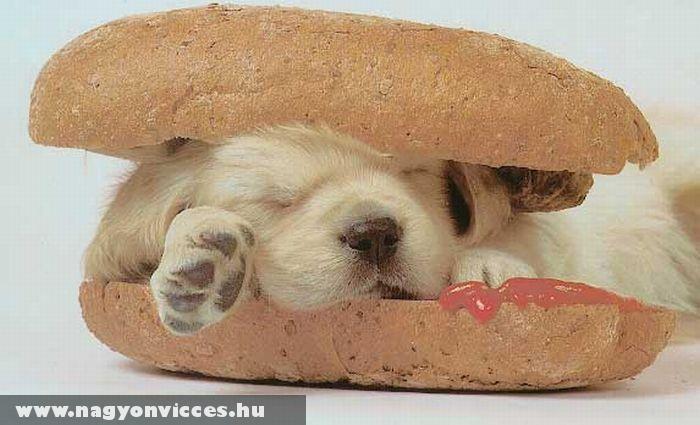 Forró kutya