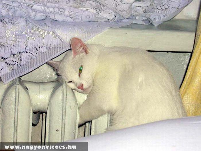 Fázós macska