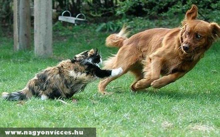 Amikor a macska irányít