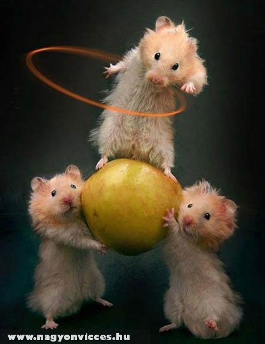 Cirkuszi egerek