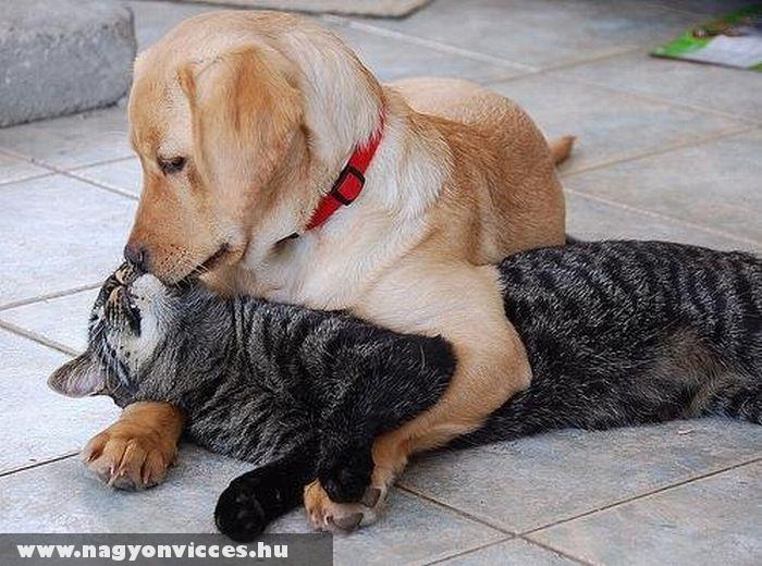 Kutya-macska szerelem