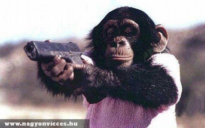 Fegyveres majom