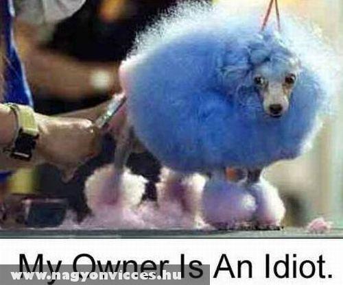 Szegény kutya