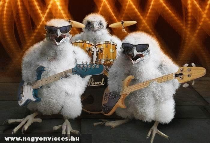 Csirke zenekar